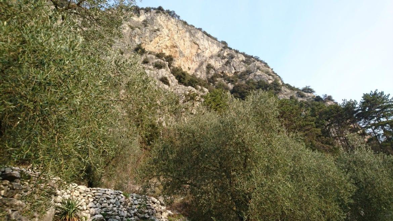 Blick auf die Kletterwand in Arco über die vielen Olivenbäume