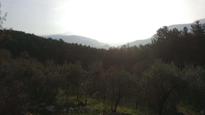 Aussicht über die Olivenbäume in der Nähe von Arco