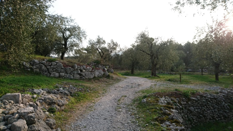 Weg mit Olivenbäumen nähe Arco